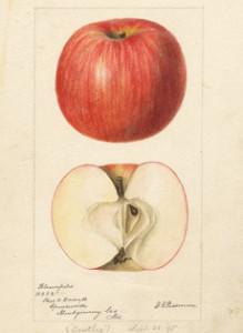 USDA+apple+illo